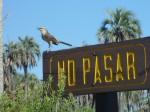 Oiseau a El Palmar