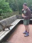 Attaque de coati (il ne devait pas aimer mon short)