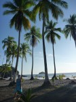 Plages et palmiers