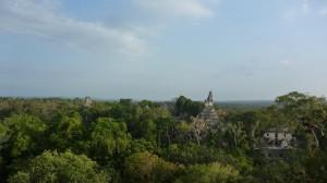 Vue sur la cite de Tikal depuis le plus haut temple