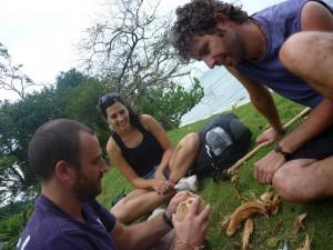 cours de noix de coco
