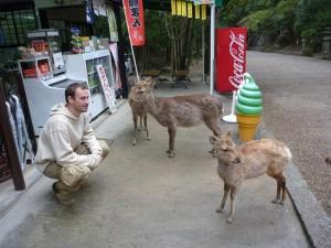 Les cerfs 'infestent' Nara