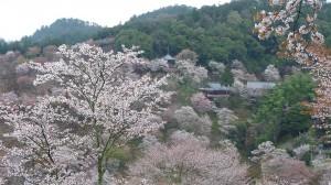 Vue de la vallee de Yoshino
