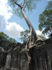 Preah Khan, envahi par la jungle