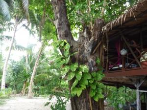 Notre cabane a Kapas