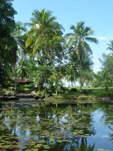 Palmiers, ciel bleu et jardin a l'anglaise... vive la Malaisie !