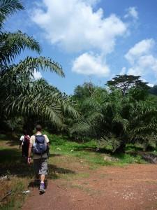 Balade dans les plantations