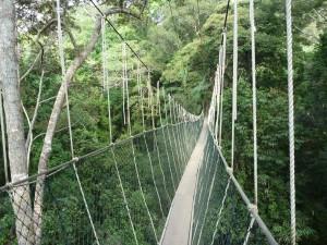 Impressionnant : 40m au dessus de la jungle !