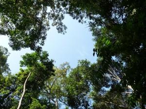 La jungle du Taman Negara
