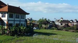 vue de notre chambre d'hote a Ubud
