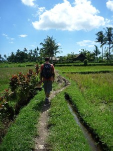 promenade le long des rizieres