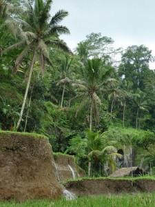 paysage dans la region de Ubud