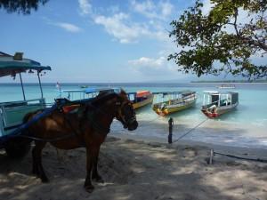 Les deux moyens de transport de l'ile