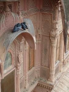 Roucoulage sur fenetre du palais de Jodhpur